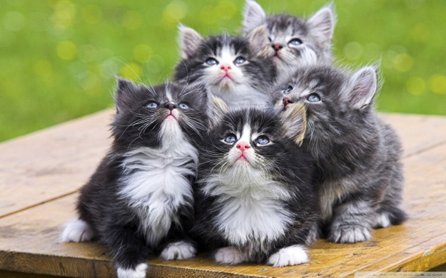 Fluffy-Kittens-2-Wallpaper-1920x1200