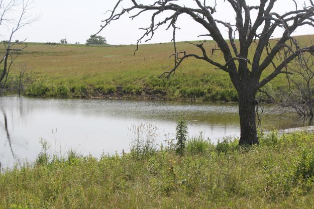 farm_pond
