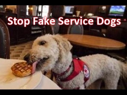 fake service dogs | homelessphilosopher
